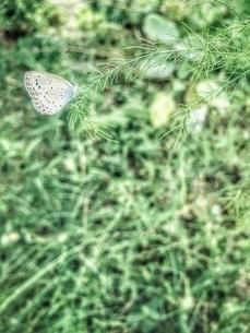 蝶の写真素材 [FYI03451734]