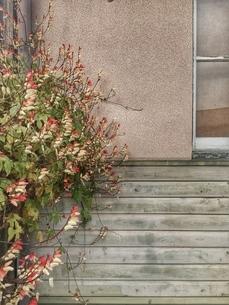 壁際の植物の写真素材 [FYI03451741]