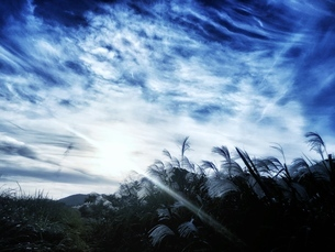 青い空の下のススキの写真素材 [FYI03451743]