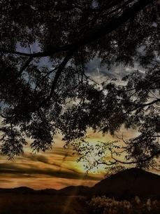 木の陰からの夕日の写真素材 [FYI03451744]