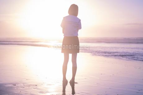 女子高生 海 後ろ姿 輝きの写真素材 [FYI03451874]