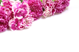 カーネーションの花束の写真素材 [FYI03451960]