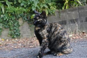 たじろぐ猫の写真素材 [FYI03452313]