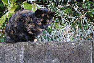 何かを見つけた猫の写真素材 [FYI03452314]