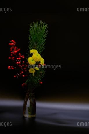 年賀状に使える正月の花の写真素材 [FYI03452330]