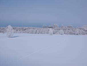 霧氷と雪原の写真素材 [FYI03452444]