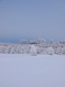 霧氷と雪原の写真素材 [FYI03452445]
