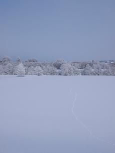 霧氷と雪原の写真素材 [FYI03452447]