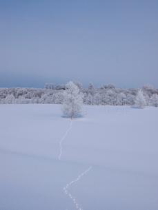 霧氷と雪原の写真素材 [FYI03452454]