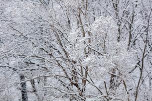 日本の風景、大阪府能勢の雪景色の写真素材 [FYI03452506]