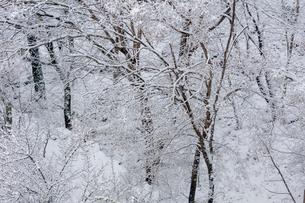 日本の風景、大阪府能勢の雪景色の写真素材 [FYI03452507]
