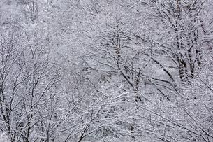 日本の風景、雪景色の写真素材 [FYI03452508]
