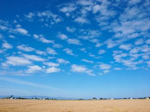 麦畑と空の写真素材 [FYI03452700]