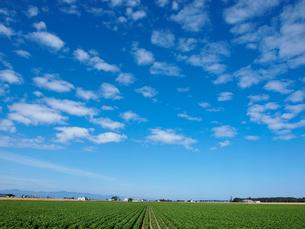 畑と空の写真素材 [FYI03452701]