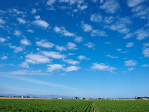 畑と空の写真素材 [FYI03452703]
