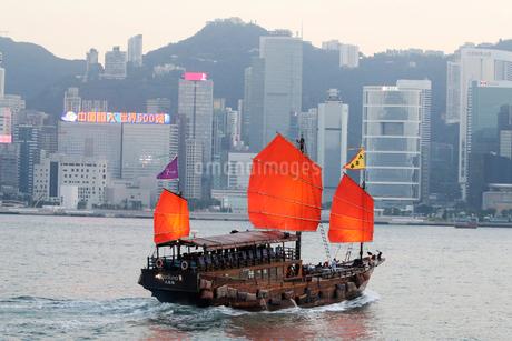 香港のビクトリア湾を航行するジャンク型観光船「アクアルナ」の写真素材 [FYI03452762]