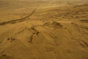 鳥取砂丘の風紋の写真素材 [FYI03452802]