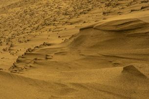 鳥取砂丘の風紋の写真素材 [FYI03452803]