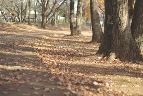 公園の並木道 no1の写真素材 [FYI03452819]