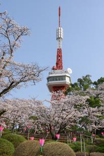 宇都宮タワーと八幡山公園の桜(栃木県宇都宮市)の写真素材 [FYI03452858]