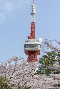 宇都宮タワーと八幡山公園の桜(栃木県宇都宮市)の写真素材 [FYI03452859]