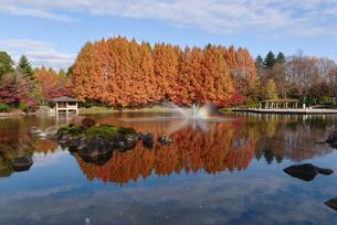 晩秋の栃木県中央公園(栃木県宇都宮市睦町)の写真素材 [FYI03452866]