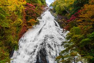 鮮やかな紅葉の中を流れる湯滝(栃木県日光市)の写真素材 [FYI03452867]