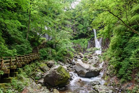裏見の滝(栃木県日光市)の写真素材 [FYI03452874]