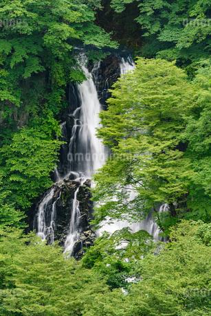 霧降の滝(栃木県日光市)の写真素材 [FYI03452881]