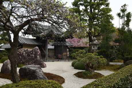 春 京都 正法寺の庭の写真素材 [FYI03452890]