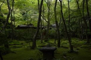 夏 京都 祇王寺の庭園の写真素材 [FYI03452893]