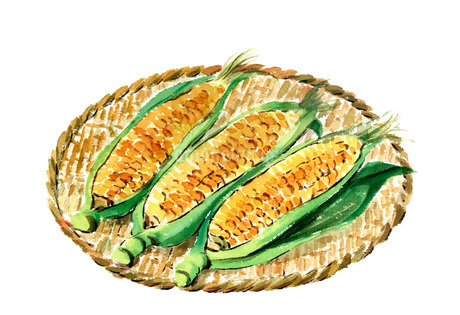 水彩トウモロコシ 夏野菜 ザルのイラスト素材 [FYI03452951]