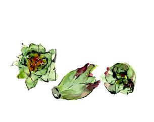 水彩 フキノトウ 蕗の薹 春野菜のイラスト素材 [FYI03452955]