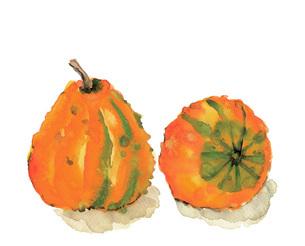 水彩 かぼちゃ 南瓜 おしゃれカボチャのイラスト素材 [FYI03452967]