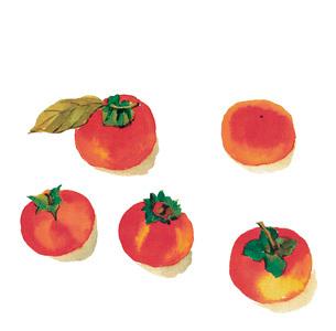 水彩 葉付き カキ 柿のイラスト素材 [FYI03452969]