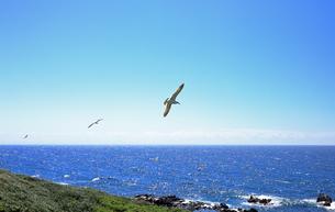 6月  天売島の黒崎海岸の写真素材 [FYI03453060]