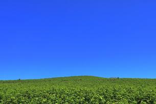 6月 天売島の地平線の写真素材 [FYI03453062]