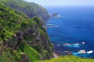 6月 天売島の断崖の写真素材 [FYI03453078]