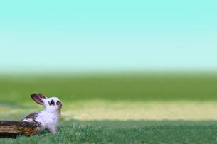 草地で遠くを見上げる白い子ウサギ1匹。自然,小動物,ペット,癒し,リラックス,夢,希望イメージの写真素材 [FYI03453128]