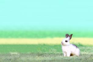 草地で遠くをみつめる白い子ウサギ1匹。自然,小動物,ペット,癒し,リラックスイメージの写真素材 [FYI03453134]