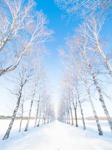 霧氷の写真素材 [FYI03453219]