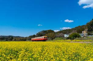 春の菜の花沿線・小湊鉄道の写真素材 [FYI03453406]