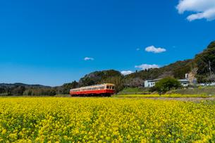 春の菜の花沿線・小湊鉄道の写真素材 [FYI03453407]