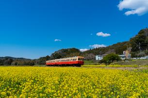 春の菜の花沿線・小湊鉄道の写真素材 [FYI03453408]