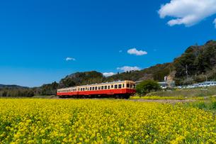 春の菜の花沿線・小湊鉄道の写真素材 [FYI03453409]
