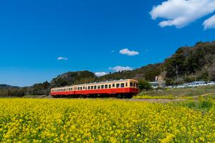春の菜の花沿線・小湊鉄道の写真素材 [FYI03453410]