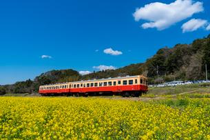 春の菜の花沿線・小湊鉄道の写真素材 [FYI03453411]