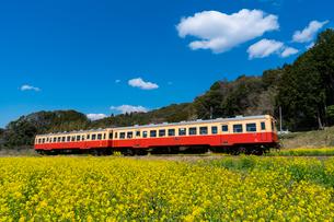 春の菜の花沿線・小湊鉄道の写真素材 [FYI03453412]