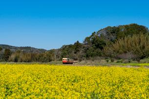 春の菜の花沿線・小湊鉄道の写真素材 [FYI03453414]
