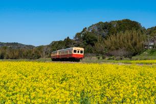 春の菜の花沿線・小湊鉄道の写真素材 [FYI03453415]